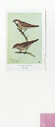 Birds Of Ceylon I