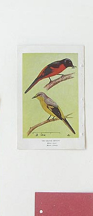 Birds Of Ceylon II